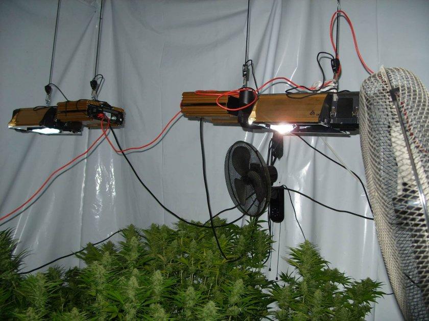 Криминалисти от РУ-Дряново разкриха малка оранжерия, изградена в къща в