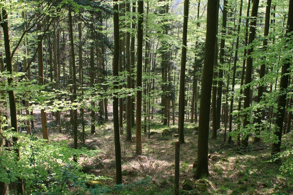 Автономно министерство по горите поискаха синдикатите в бранша. В седмицата