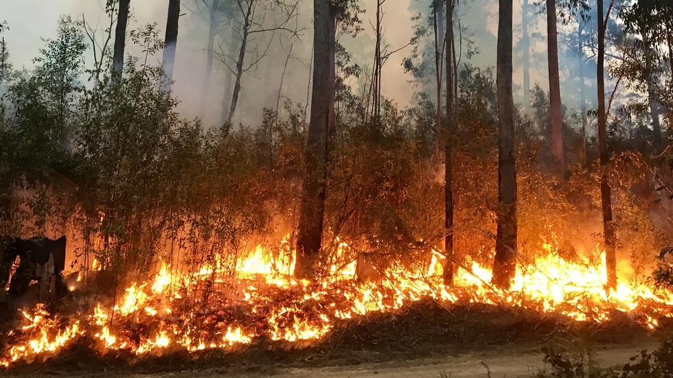 Голям пожар гори в гръцката област Коринт. Евакуирани са жители