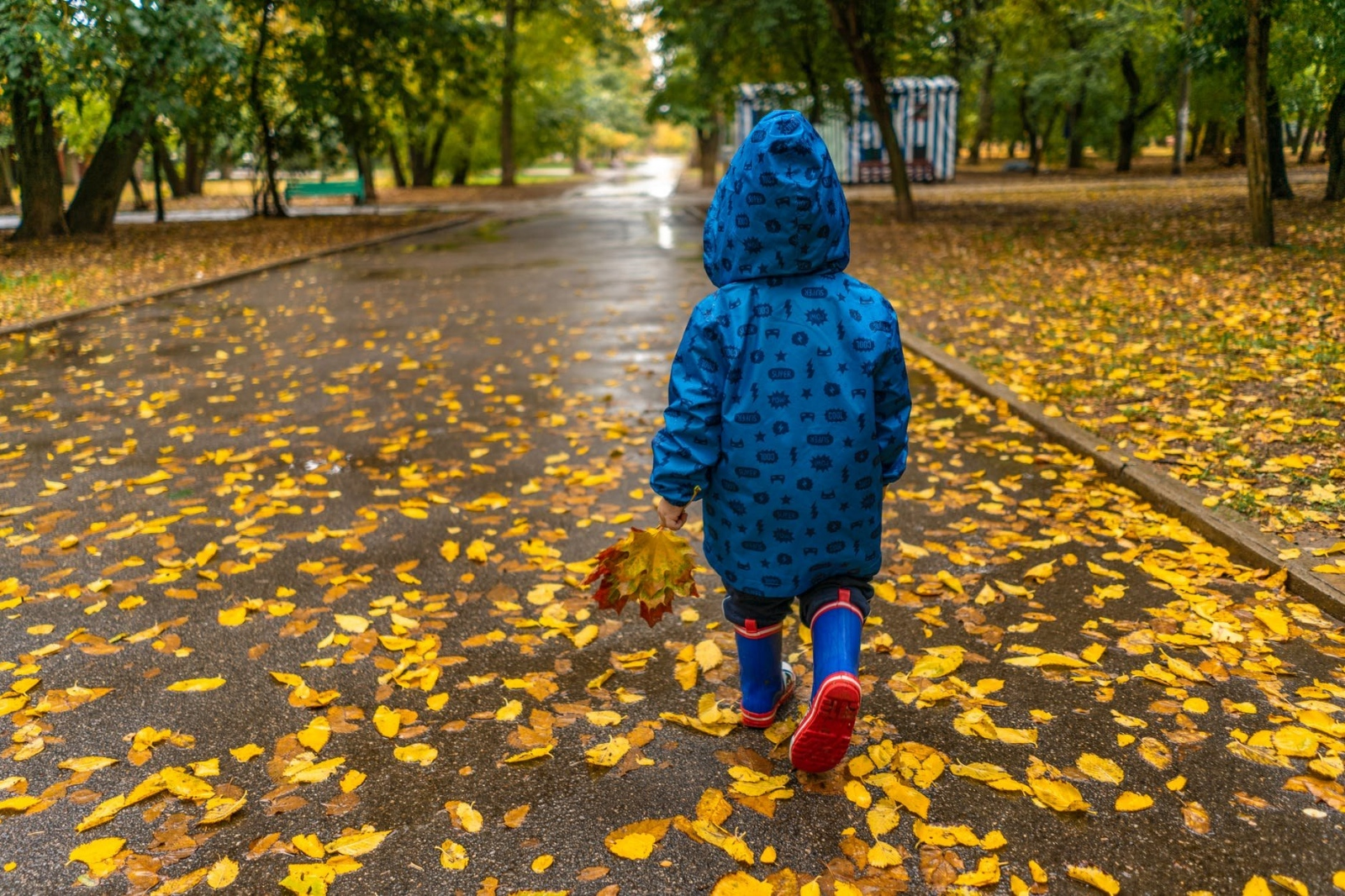 Днес ще духа слаб, в Източна България - умерен вятър